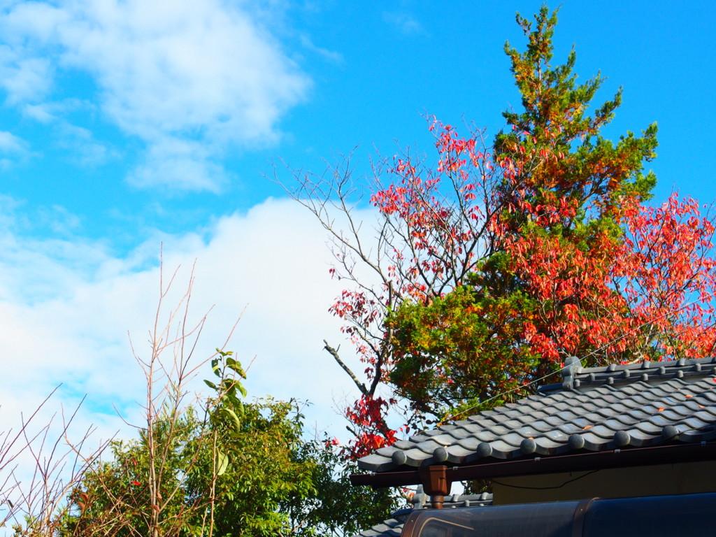 f:id:kobiyama:20161112092123j:plain