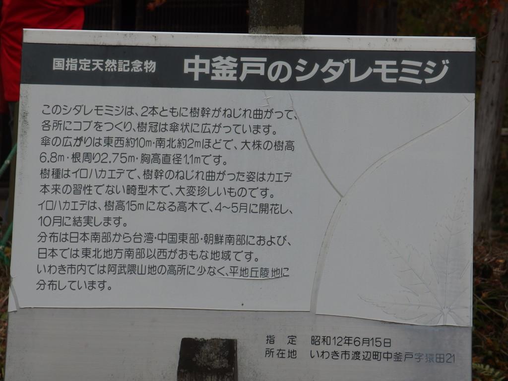 f:id:kobiyama:20161123125312j:plain