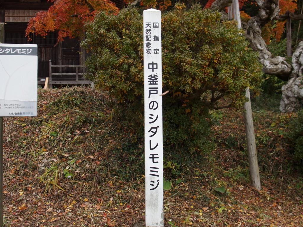 f:id:kobiyama:20161123125323j:plain