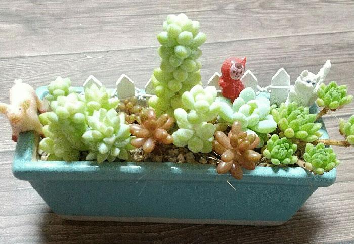 虹の玉・樹氷・ビアーポップ・ロッティ・ウィンクレリーなどの多肉植物を取り入れた寄せ植え(ギャザリング)