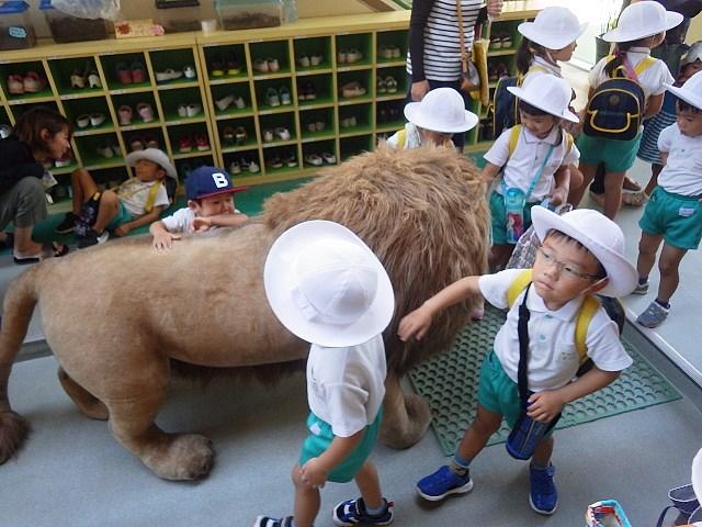 f:id:kodakara-kindergarten:20180903144818j:image:w320