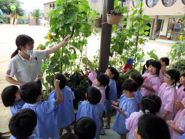 f:id:kodakara-kindergarten:20200715110323j:plain