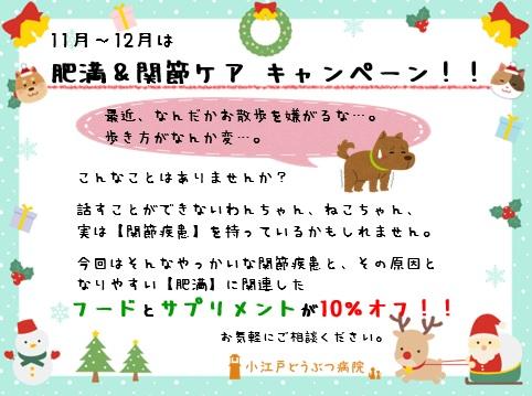 f:id:koedo-animal:20171031164304j:plain
