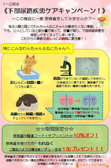 f:id:koedo-animal:20181220110040j:plain