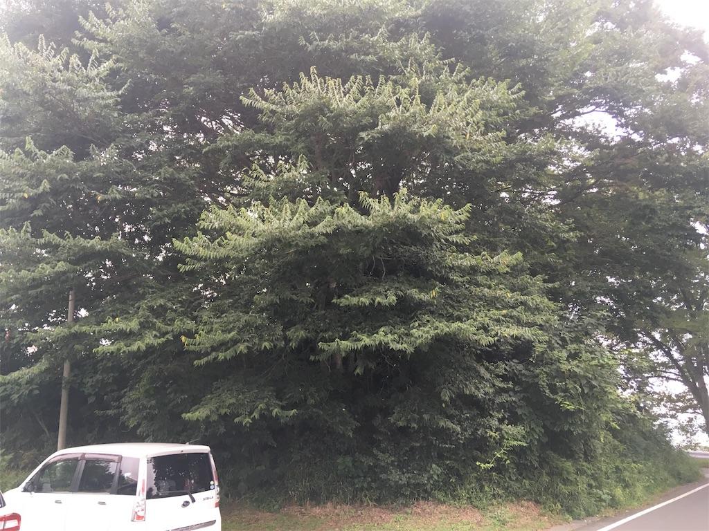 f:id:kofunmeguri:20190520234140j:image