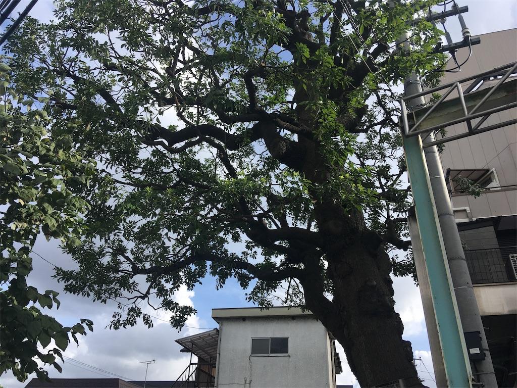 f:id:kofunmeguri:20190814193616j:image
