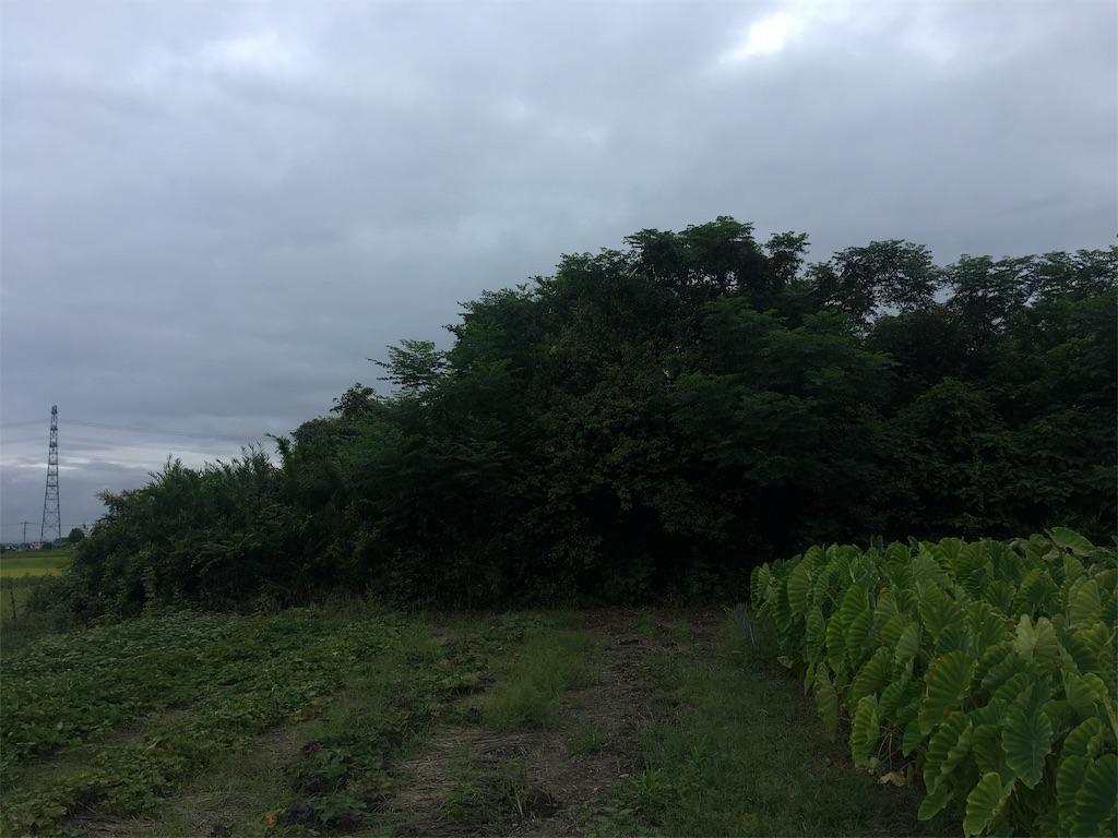 f:id:kofunmeguri:20200915220914j:image