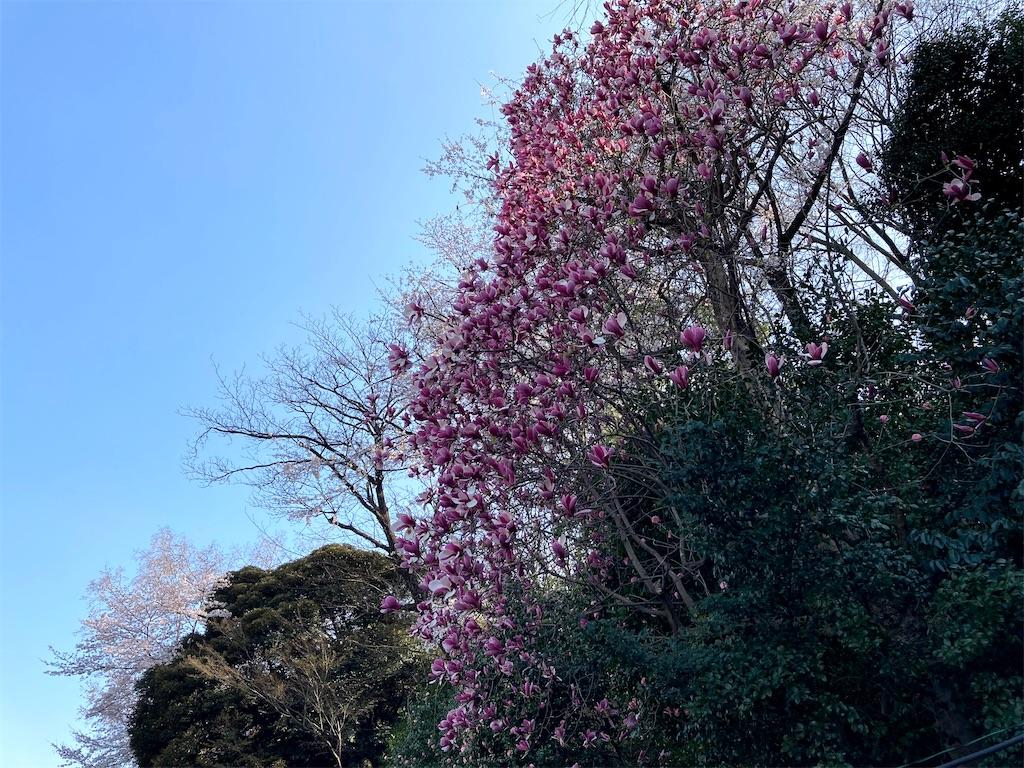 f:id:kofunmeguri:20210327104626j:image