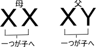f:id:kogito1:20161213130048j:plain