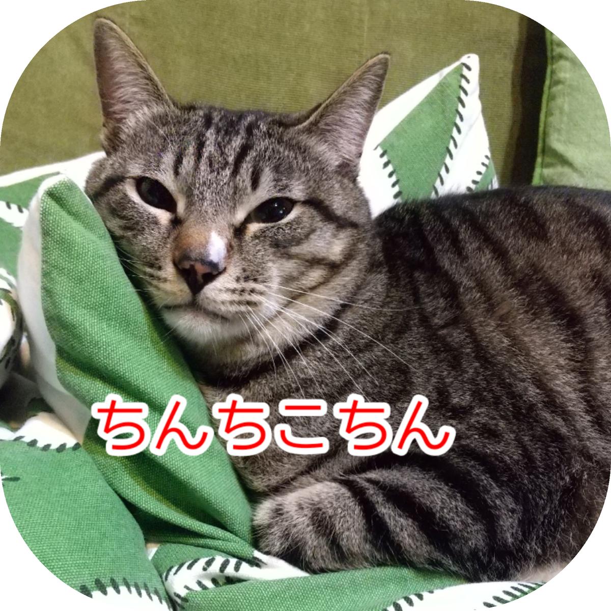 f:id:kohanakotaro:20210410120824j:plain