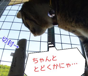 f:id:kohanakotaro:20210508090103p:plain