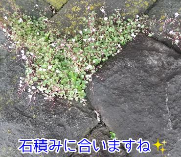 f:id:kohanakotaro:20210513193309p:plain