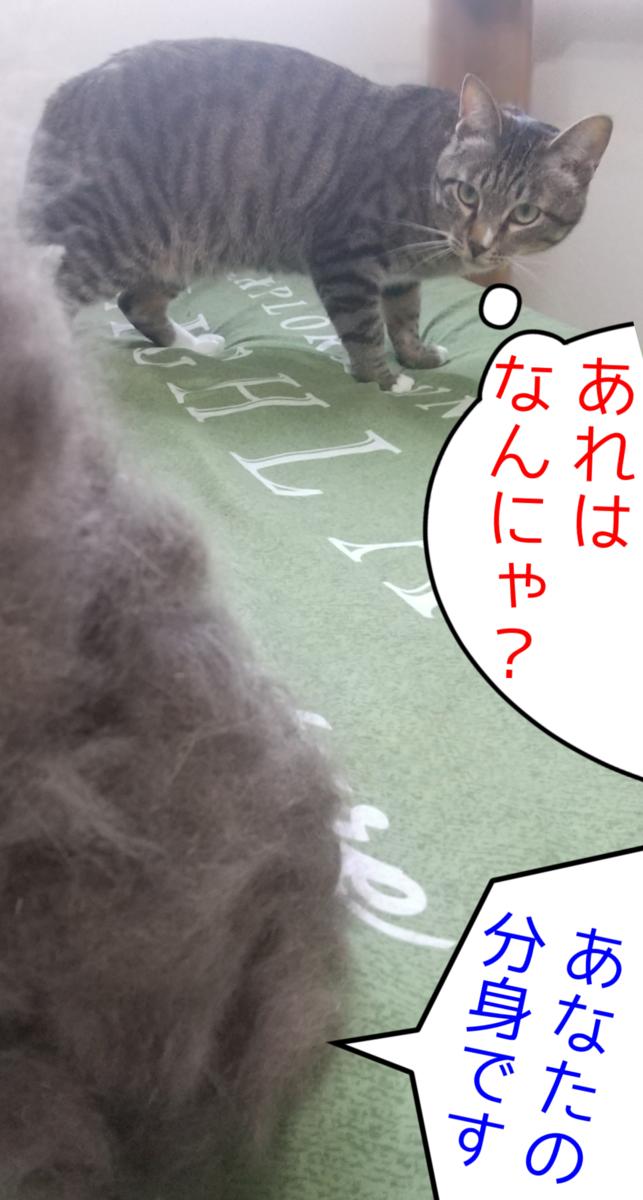 f:id:kohanakotaro:20210617123219p:plain