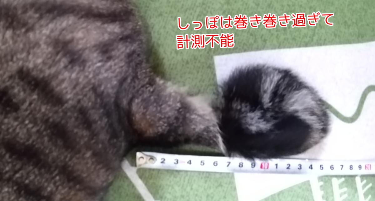 f:id:kohanakotaro:20210627170256p:plain