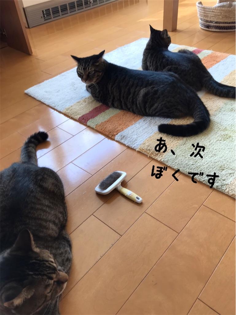 f:id:kohchan-mom:20201001153708j:image