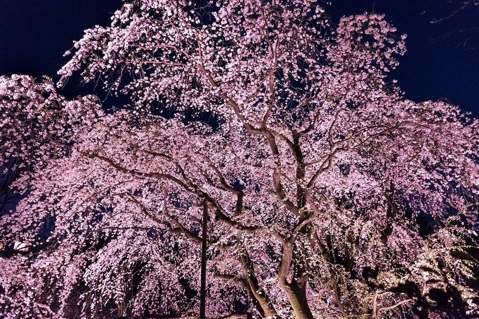 f:id:kohei_nagura:20200402114257j:plain