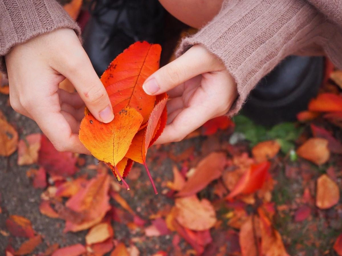 秋キャンプに備えて買っておきたいアイテム3選。
