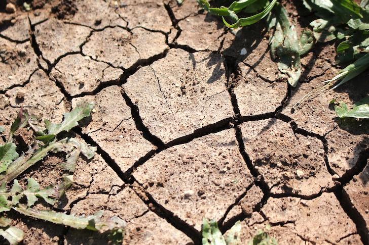 干からびた植物と大地