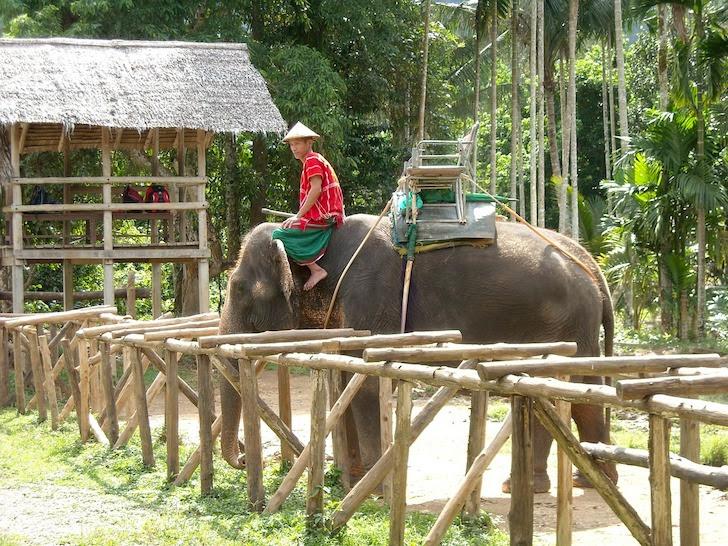 タイの田舎で暮らす象と象使い