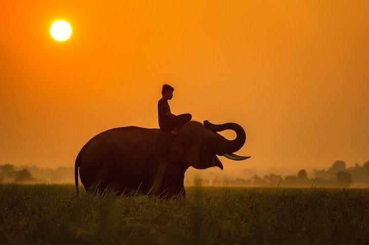 草原で象に乗る男性