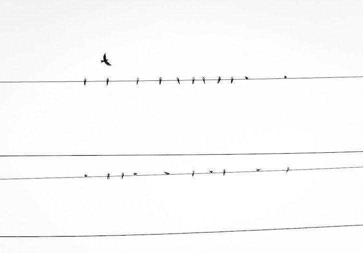 電線に群れをなして止まる鳥たち
