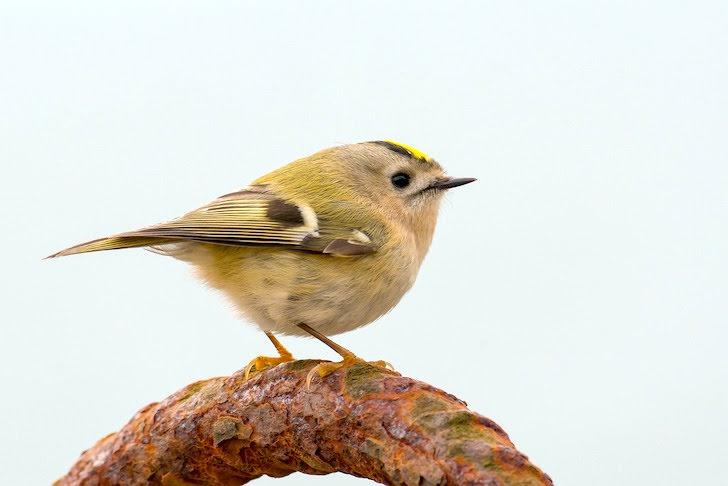 枝に止まる小鳥
