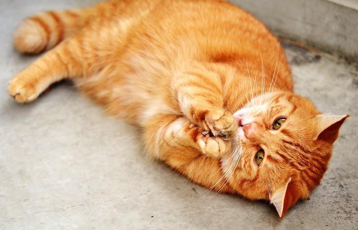 手でつかんで何かを食べる猫