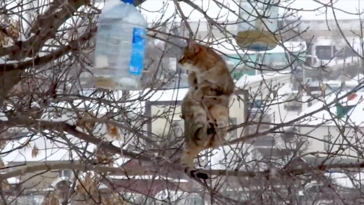 鳥の餌を奪い取ろうとする猫