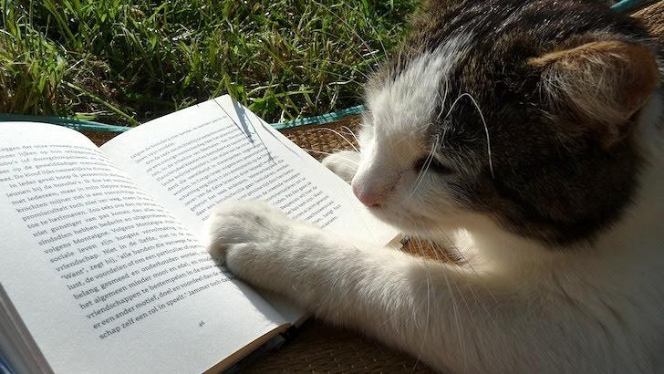 本を読んでいるかのような猫