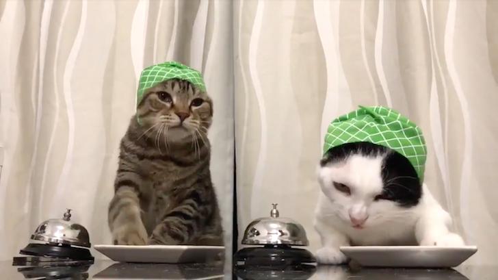 ベルを鳴らしてキャットフードを要求する猫たち