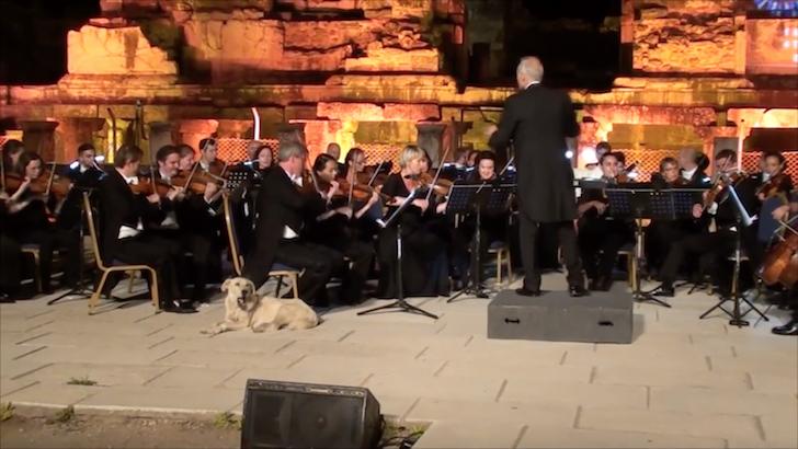 クラシックコンサートに乱入する犬
