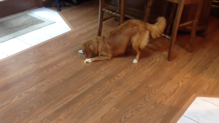 レモンの酸っぱさに驚きながらも食べようとする犬