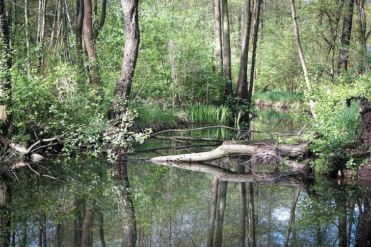 森林の自然あふれる風景