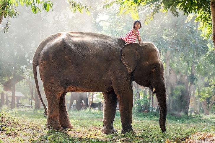 象の頭にまたがる少女