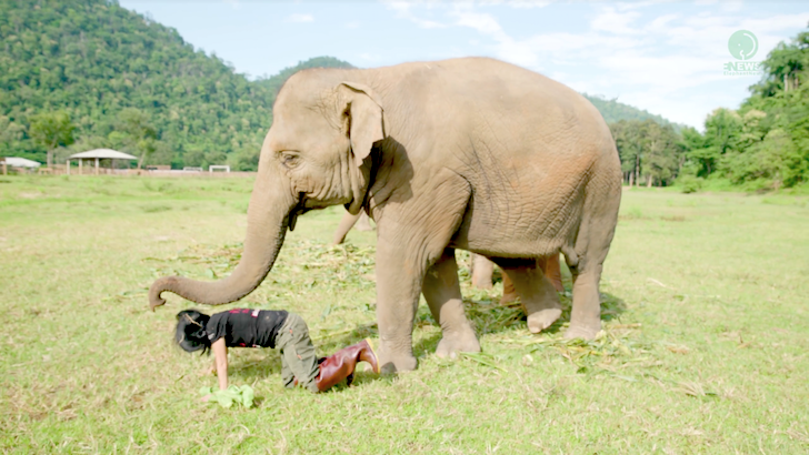 女性と遊ぶ象