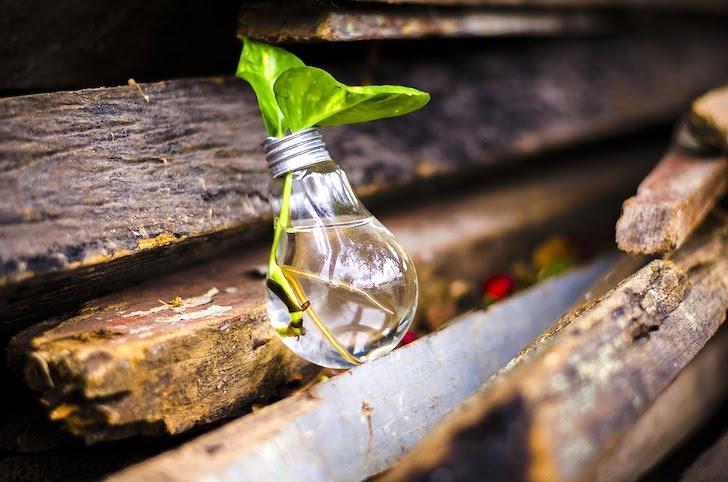 植物が入っている電球