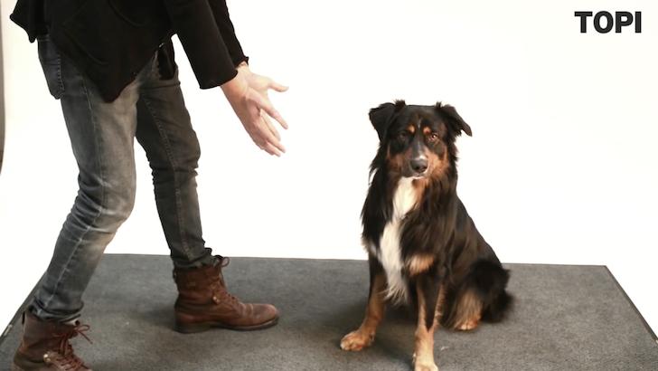 目の前から消えたごほうびに驚きの表情を見せる犬