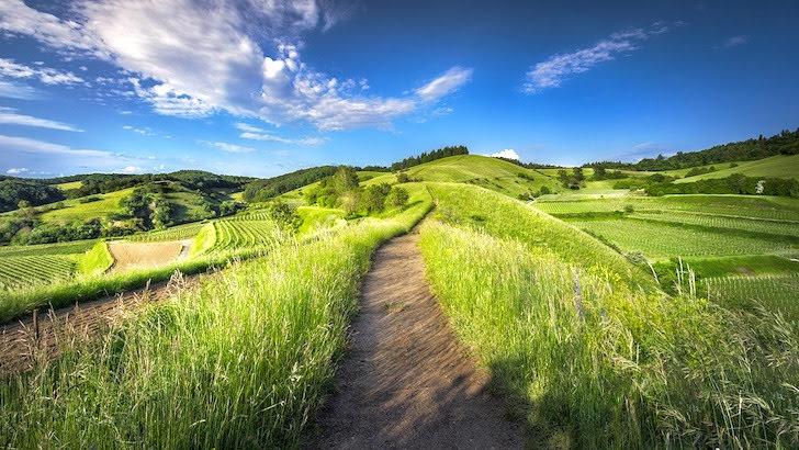 小さな丘に続く小道