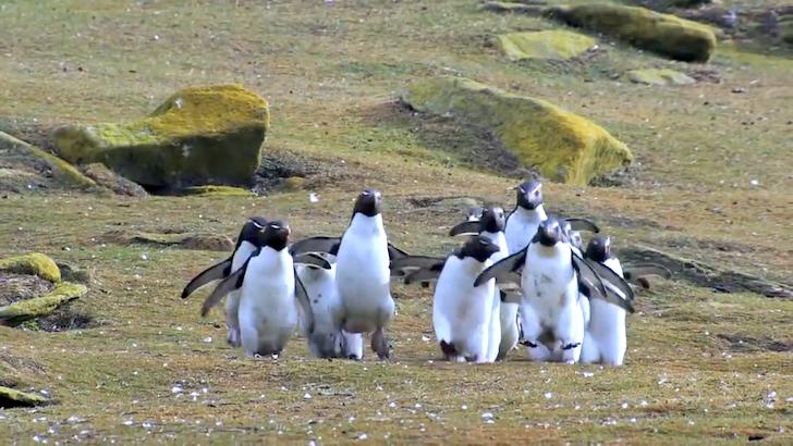 ちょうと並走しているペンギンたち