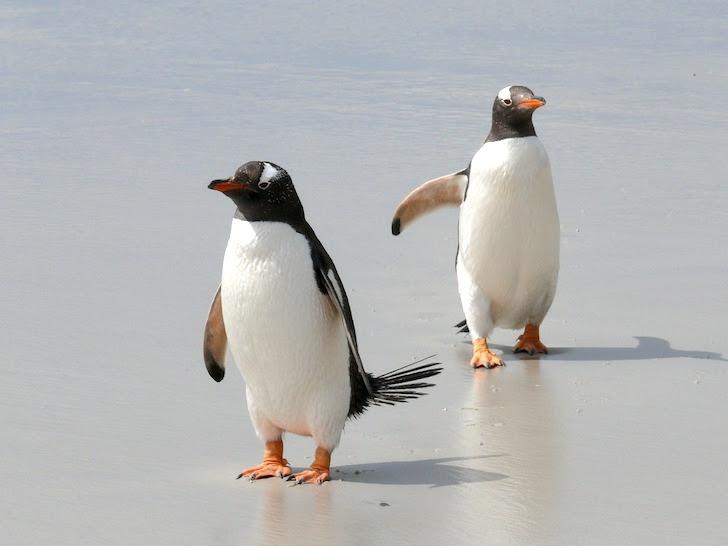 砂浜にいる2羽のペンギン
