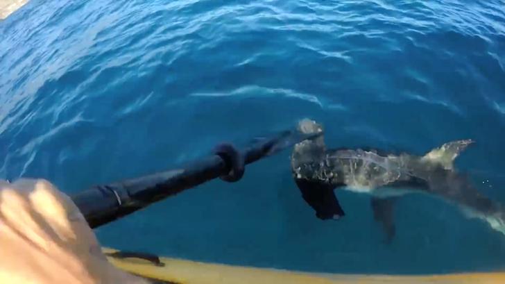 執念深くカヤックを襲撃するシュモクザメ