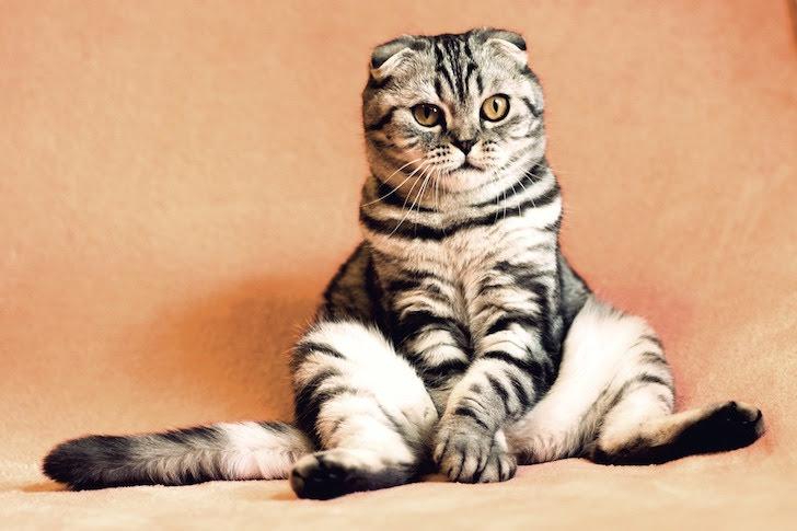 人間のように座る猫