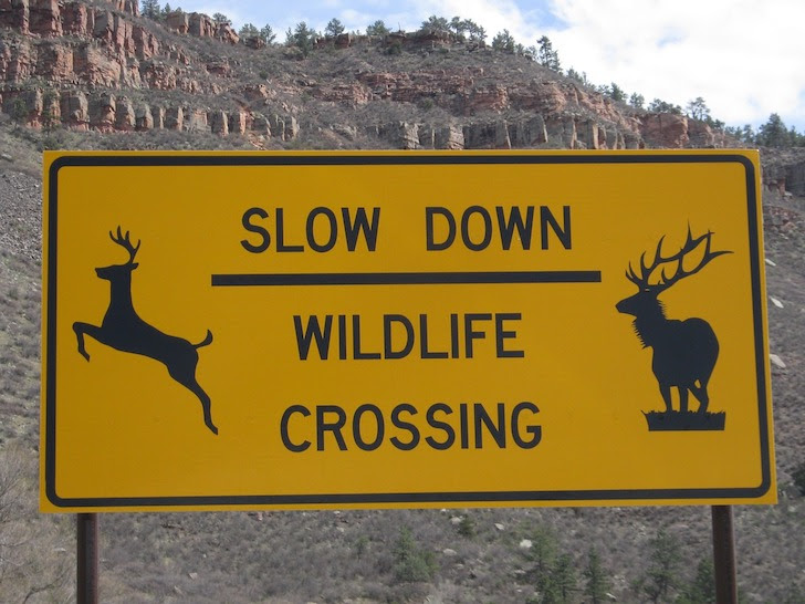 ヘラジカ注意の交通標識