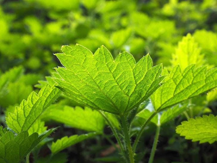 新鮮な緑色の葉っぱ