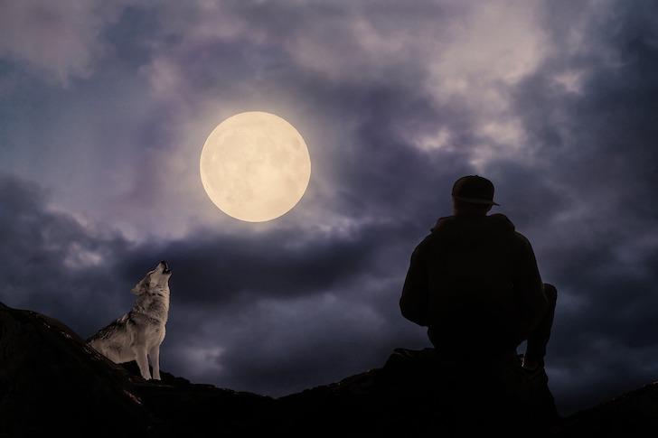 満月に向かってほえるオオカミ