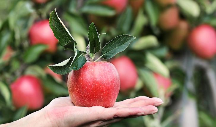 葉っぱ付きのリンゴ