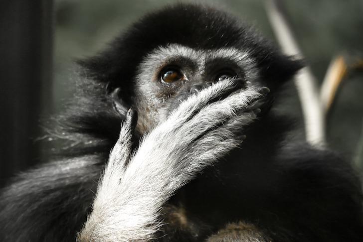 驚いたような表情を見せる猿