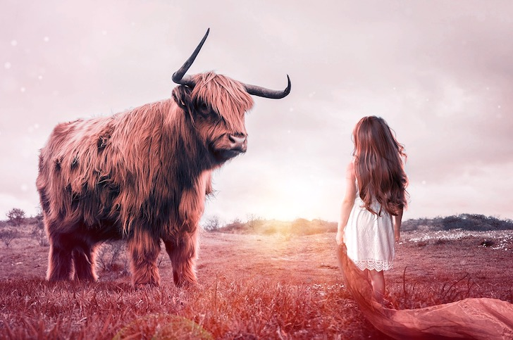 少女と相対する猛牛