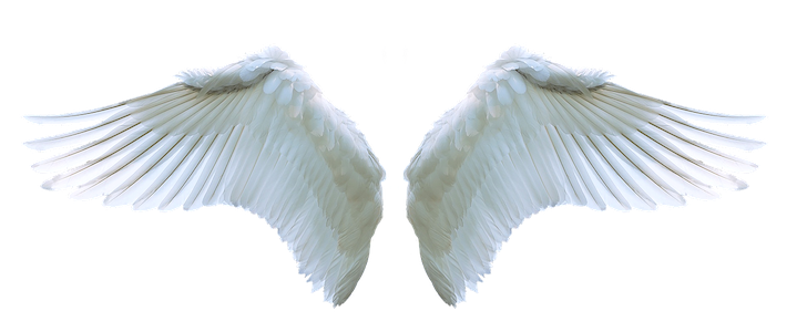 天使の白い翼