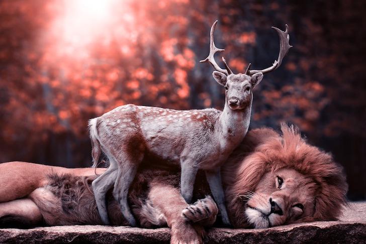 こちらを見ている鹿とライオン